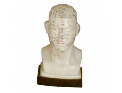 Модель для акупунктуры - Голова (20см)
